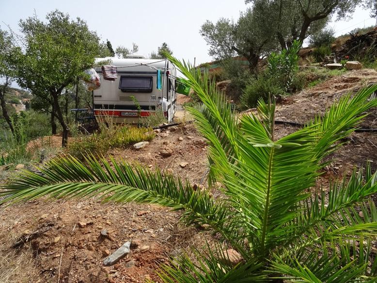 natürlich unsere Palme hinter dem Wohnwagen in dem grad Freunde Ihren Urlaub verbringen