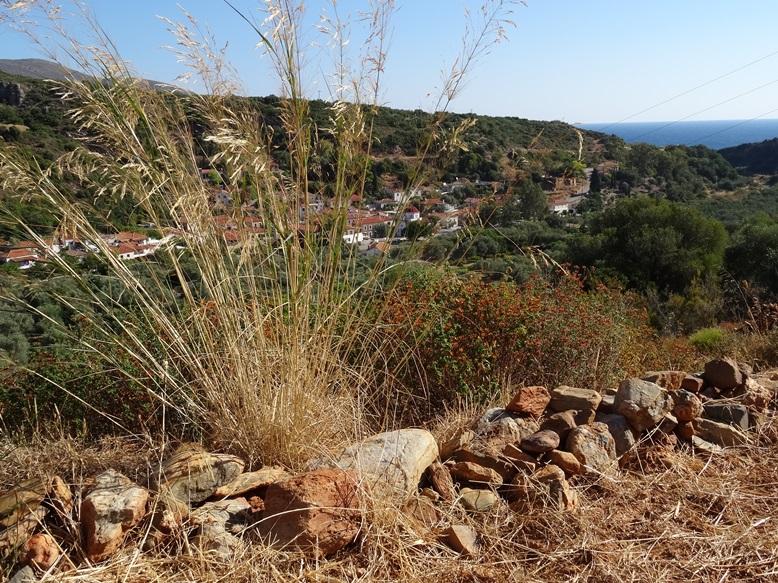Blick über unseren kleinen Steinwall nach Nomia Lakonien