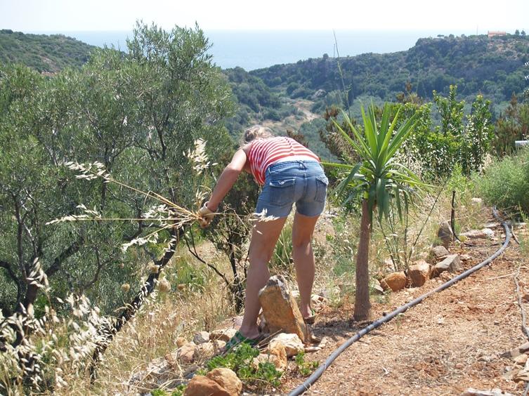 """nicht nur alle unsere Pflanzen sind prima gewachsen, leider auch jede Menge vertrocknetes """"Unkraut"""" was wir nun jähten und mähen müssen"""