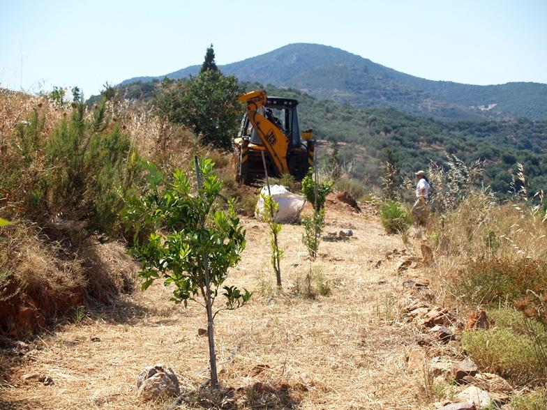 Sind begeistert vom Wachstum unserer neu gepflanzten Bäume und schließen die von der Regenzeit hinterlassenen Spuren