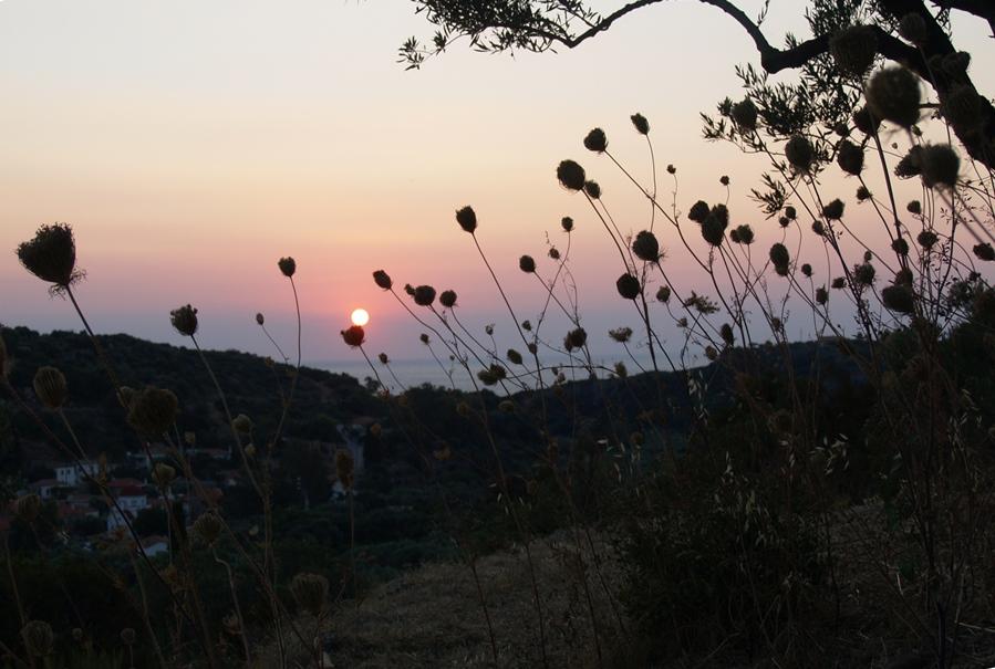 Sonnenaufgang von der unteren Terrasse bei den Oliven