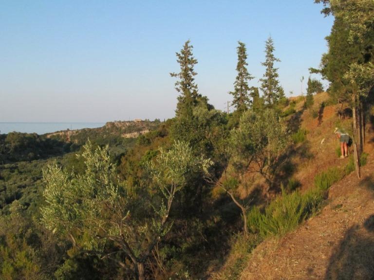 Blick in der Abendsonne von den Oliventerrassen an unserem Zauberwald vorbei zum Meer