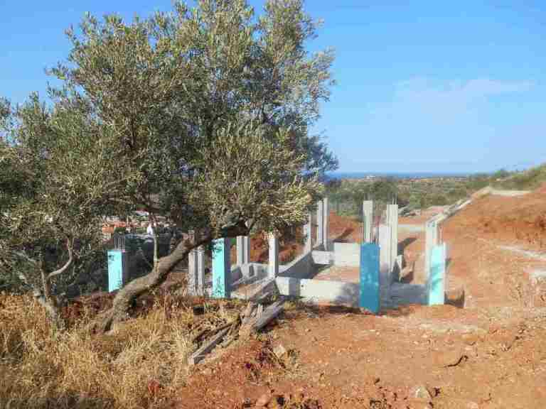 Der ganz besondere Ölbaum an dem Silke viele Stunden gesessen hat bevor wir uns zum Kauf des Grundstücks entschlossen haben