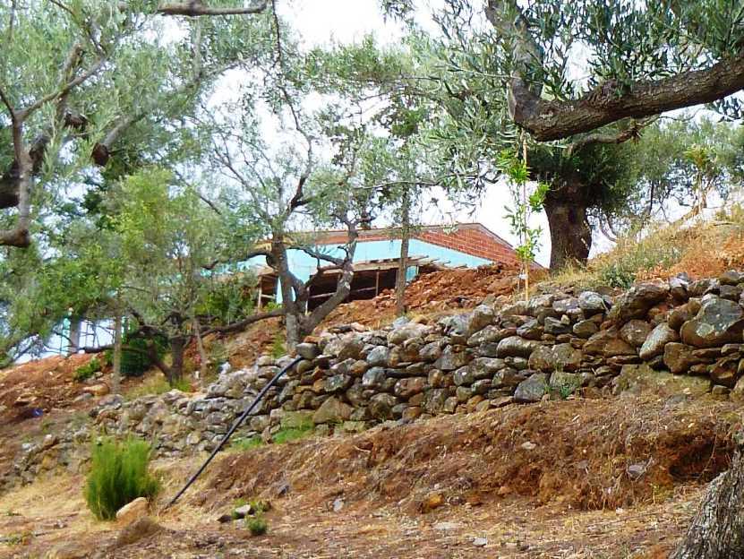 Blick von den Olibenterrassen aus dem Zauberwald hoch zum Wohnhaus