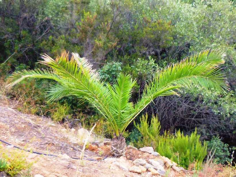 unsere Palme - was hat sie für viele neue Blätter bekommen - Danke an unsere Freunde Christa & Wolfgang für diese Fotos