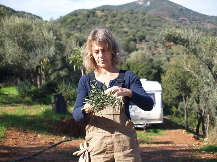 Es ist Tradition, aus den Abschnitten der Oliven-Äste das Anfeuerholz für den nächsten Winter zu binden