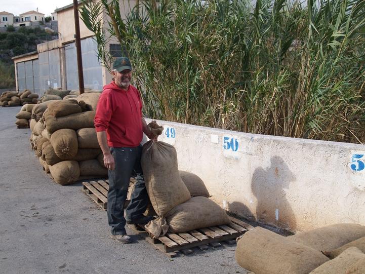 am 17.11. geben wir unsere Oliven in die Ölmühle in Nomia