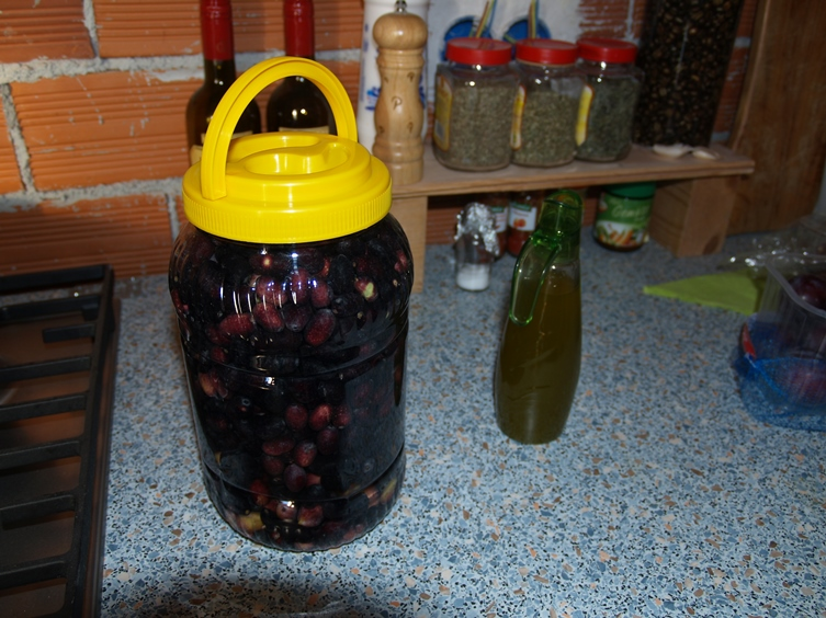 frische Oliven werden gewässert damit sie später in Kräuter eingelegt werden können