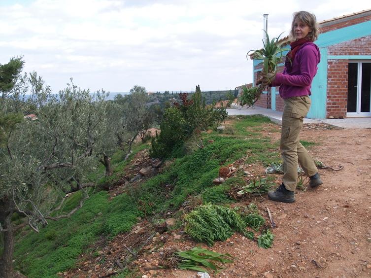von den Siedler NAchbarn Willy und Anneliese haben wir gestern Abend viele Blumen und Kakteen zum Einpflanzen bekommen