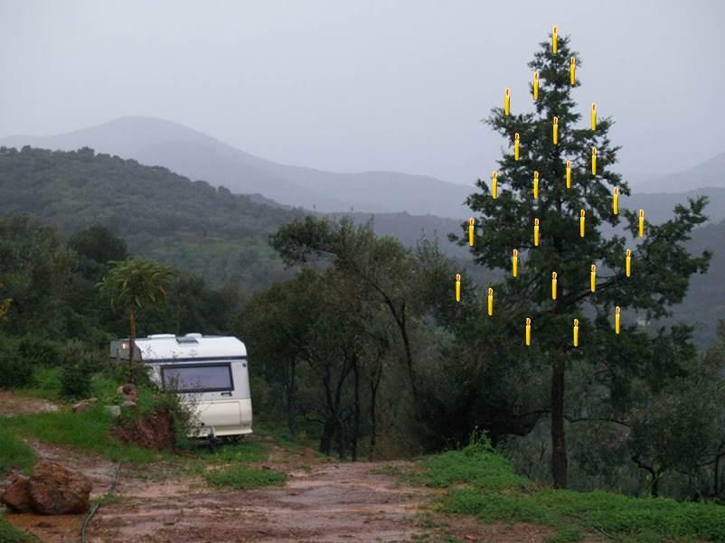 Wir haben keine Lichterkette zum Kauf gefunden. Gäb es eine würden wir sie an dieser Zypresse aufhängen :)