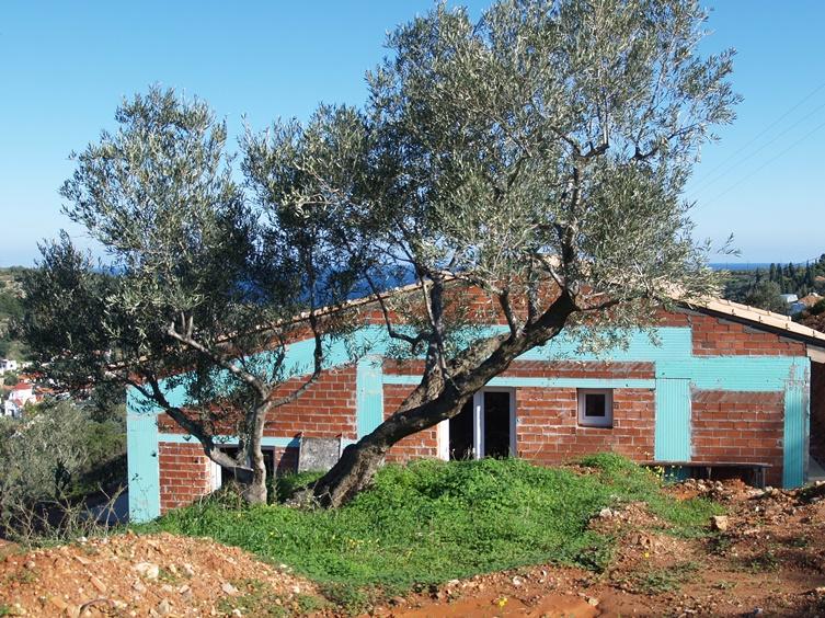 nun steht das Haus unter dem ganz besonderen Olivenbaum, dort saß Silke 2013 viele Stunden bevor wir uns zum Kauf des Grundstücks entschlossen haben