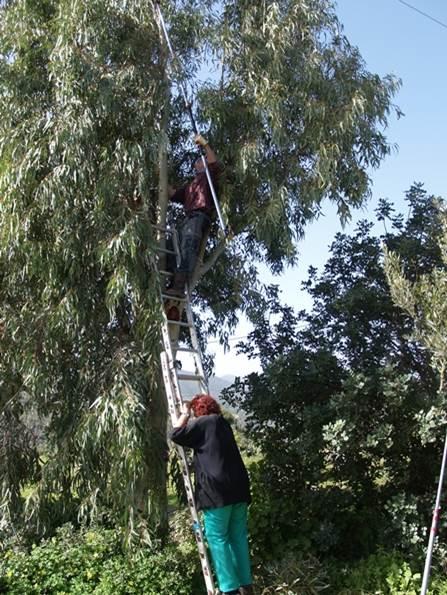 gemeinsam regeln wir das und machen gleich noch etwas Brennholz (Anneliese an der Leiter)