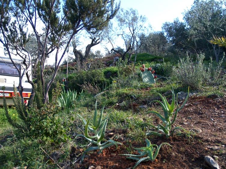 """wieder viele neue Pflanzen finden einen guten Platz auf unserem Grundstück, Silke hatte heute """"Pflanztag"""""""
