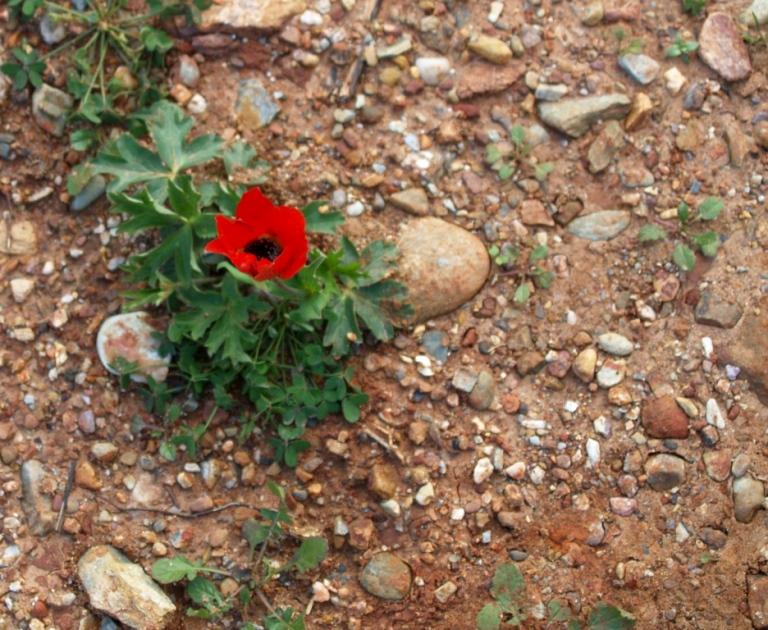 aus Sand und Stein wachsen zur Zeit wunderschöne Blumen