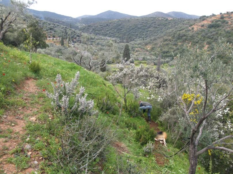 Silke ganz unten im Zauberwald am Roden und Wege bauen