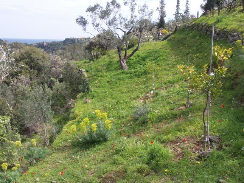 die letztes Jahr gepflanzten Orangen und Zitronen gedeihen wunderbar