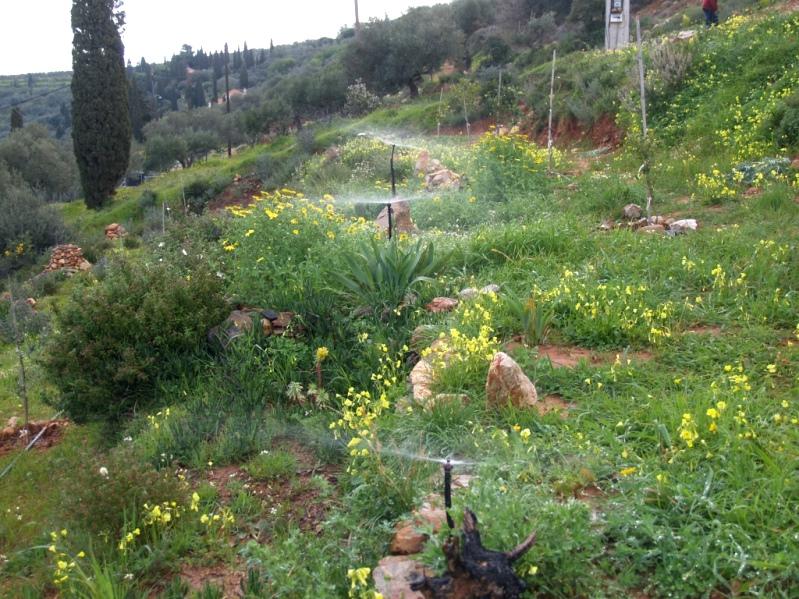 alles dreht sich im Moment um die Bewässerung für die trockenen Sommermonate