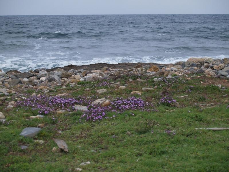 es bleibt auch Zeit für einen Spaziergang am Meer
