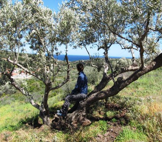 schon 2013 ist Silke Stunden lang in diesem Olivenbaum gesessen
