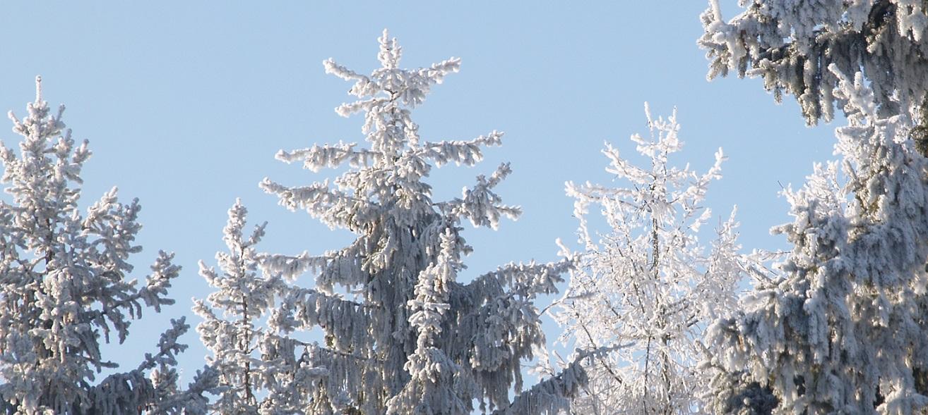 Eiszeit ~ -15°C - wenn die Luft gefriert: Tannen am Weiher