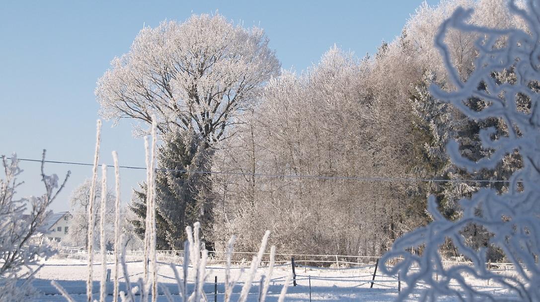 Eiszeit ~ -15°C - wenn die Luft gefriert: Nachbars Wäldchen