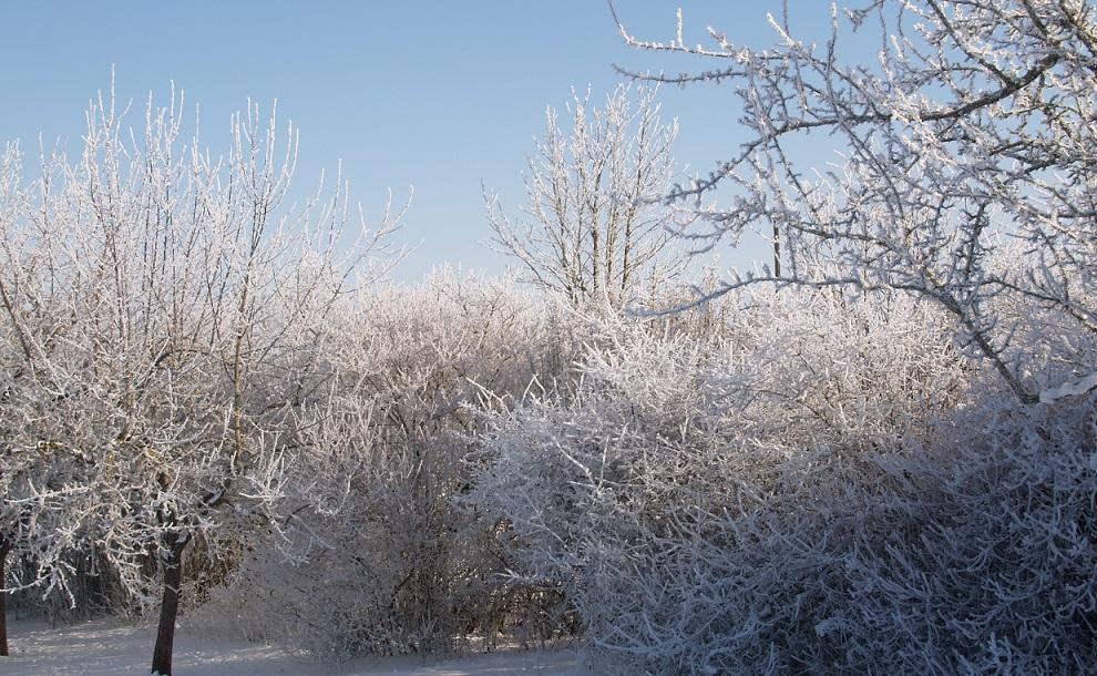 Eiszeit ~ -15°C - wenn die Luft gefriert: Blick in unseren Garten