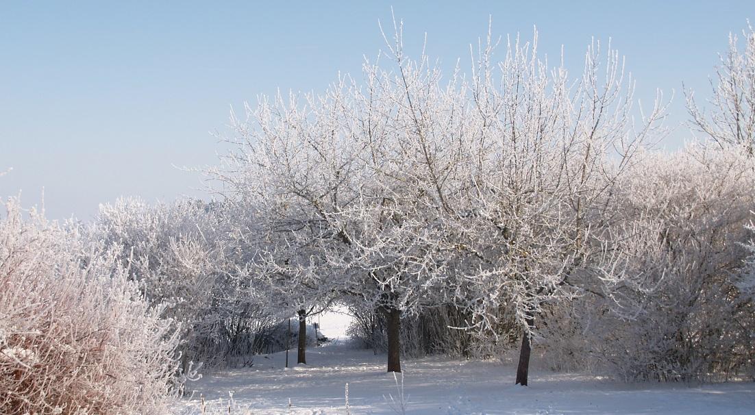 Eiszeit ~ -15°C - wenn die Luft gefriert: Blick in unseren Garten, da durch geht es zum Frühling