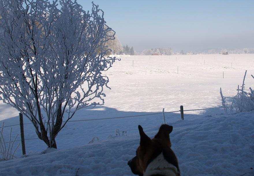 Eiszeit ~ -15°C - wenn die Luft gefriert: an was er wohl denkt ??